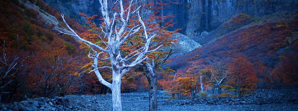 Autumn trees: Slideshow CSS3